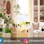 شرایط مورد نیاز پرورش گیاهان در داخل خانه