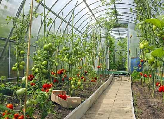 گلخانه - مبانی سیستم گرمایش و حرارت گلخانه