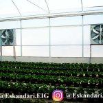 سیستم تهویه گلخانه