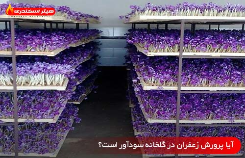 آیا پرورش زعفران در گلخانه سودآور است؟ - هیتر اسکندری