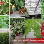 معرفی پرسوردترین محصول گلخانه ای در ایران - هیتر اسکندری