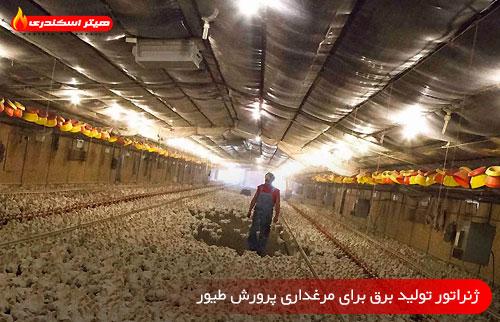 ژنراتور تولید برق برای مرغداری پرورش طیور - هیتر اسکندری